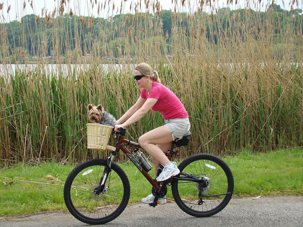 Cómo pasear perros en bicicleta