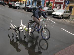 Paseo en bicicleta con perros