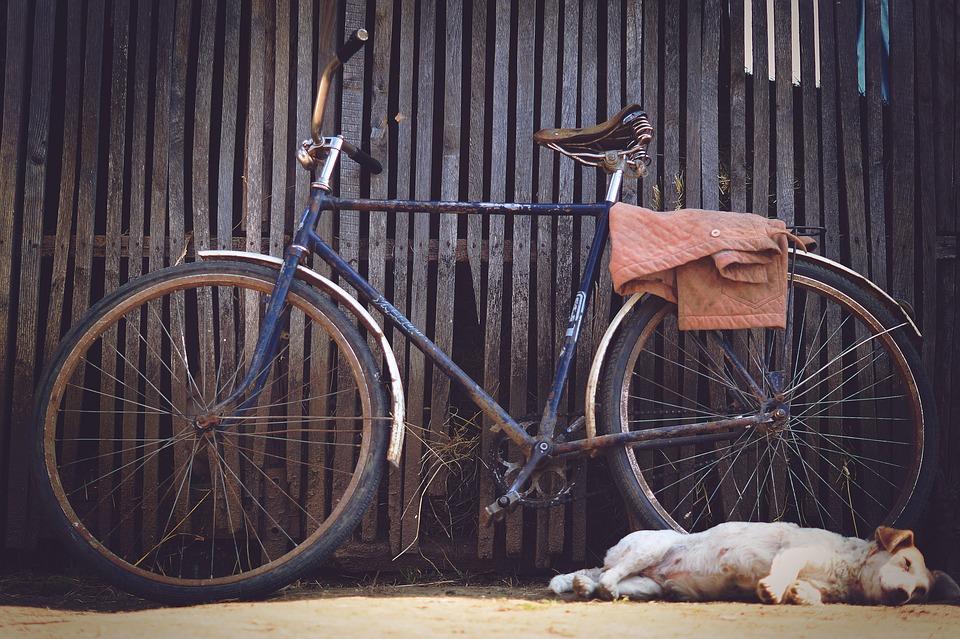 Perros familiarizándose con las bicicletas